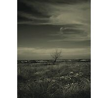 A Tree, Some Clouds, A View Photographic Print
