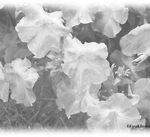 SOFTNESS by DreamCatcher/ Kyrah