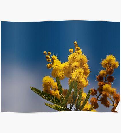 Un bokeh di  mimosa  Poster