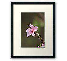 James 4:10; Peach Tree Blooms, La Mirada, CA USA Framed Print