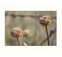 SUMPTUOUS SEEDHEADS Art Print