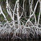Mangrove Roots by Rosalie Scanlon