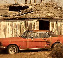 Mustang Dreaming by Lynn McCann