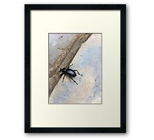 Go Beetle Go Framed Print