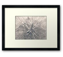 MARVELOUS PUFFBALL Framed Print
