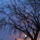 November Evening by ys-eye