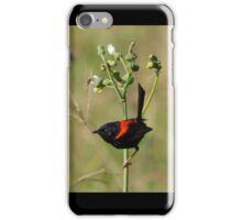 Red-backed Fairywren iPhone Case/Skin
