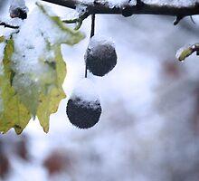 Snow by Ikrus