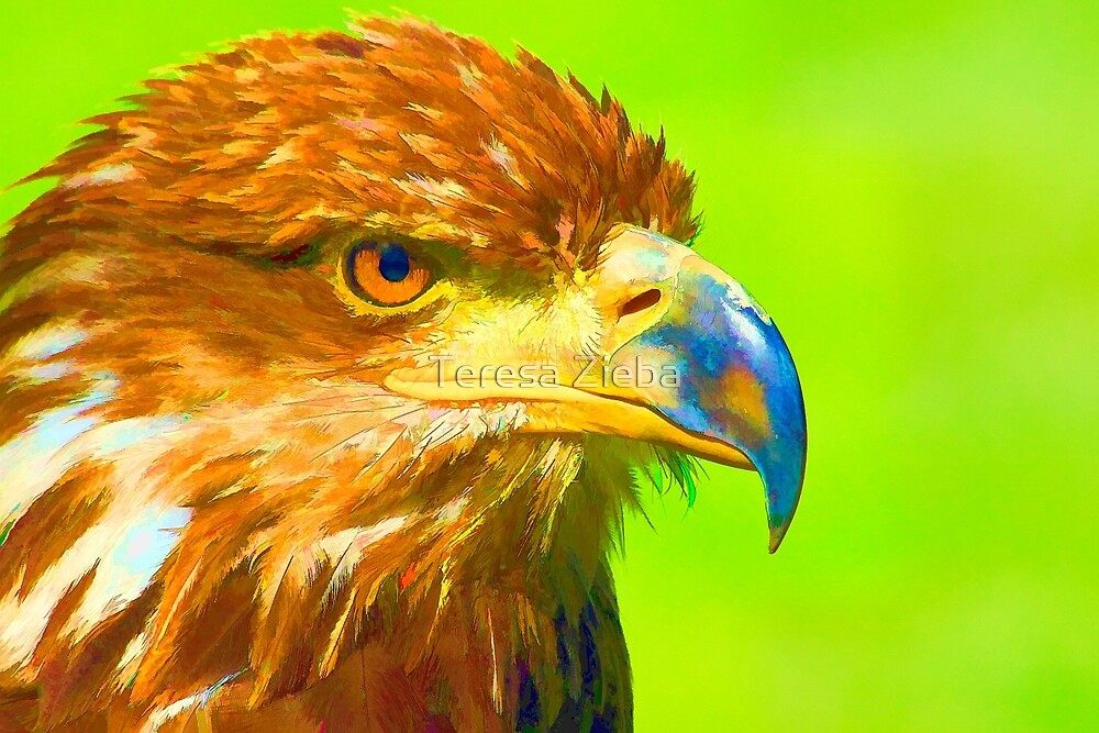 Golden Eagle by Teresa Zieba