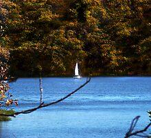 Autumn Sailing I ~ Lake Jacomo by Cynthia Chronister