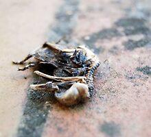 Naturaleza muerta by Ikrus