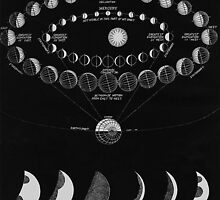 The Moon Phases  by Shevaun  Shh!