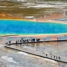 Grand Prismatic Spring, Yellowstone NP by Teresa Zieba