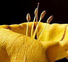 Suntan lotion by Brian Edworthy