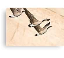 Geese & Canyon Wall Canvas Print