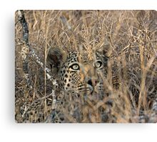 I Can See You, But You Can't See Me Canvas Print