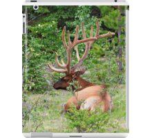 Elk in Jasper National Park iPad Case/Skin