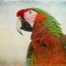 Military Macaw by Teresa Zieba