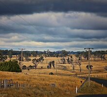 A Big and Thirsty Land by wallarooimages