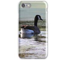 Canada Geese iPhone Case/Skin