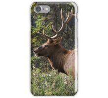 Elk in Jasper National Park iPhone Case/Skin