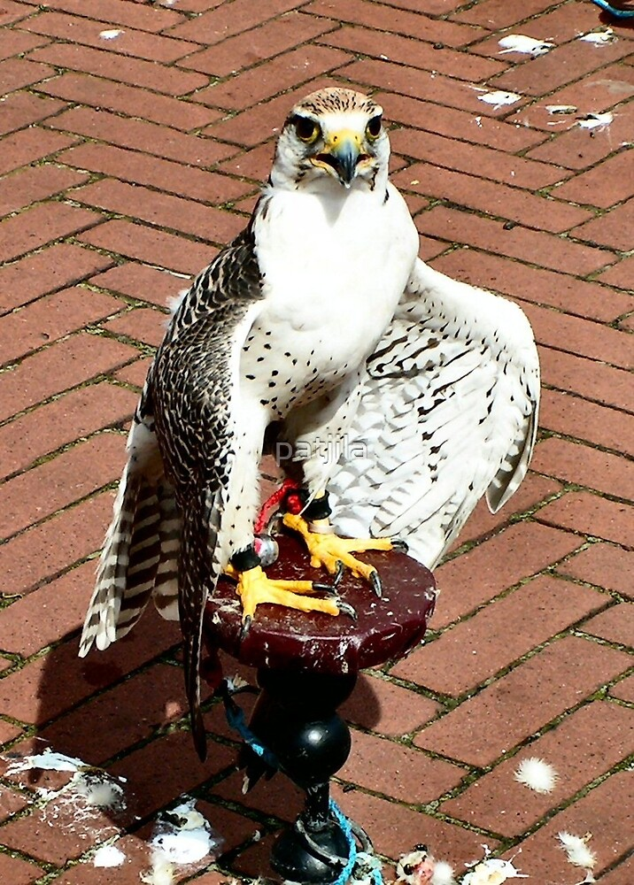 Trained falcon in the heath of the day by patjila