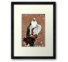Trained falcon in the heath of the day Framed Print