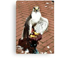 Trained falcon in the heath of the day Canvas Print