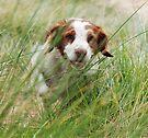 Run by Helen Green