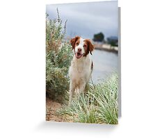 Brittany At The Beach Greeting Card