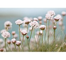 St. Ives Thrift Textured Photographic Print
