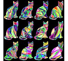 Colorful Cats 2 Photographic Print
