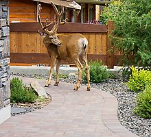 Decorative Garden Paving Stone - jppavingstones.ca by Mike Hurley