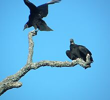 Vultures in the blue by Mark McCune