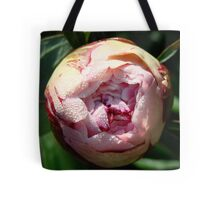Pink Rose in Early Sunlight Tote Bag