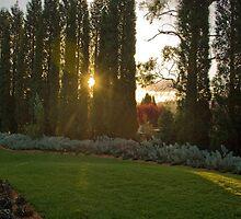 Garden Sunset - Bowral, NSW by Scott  Dyer