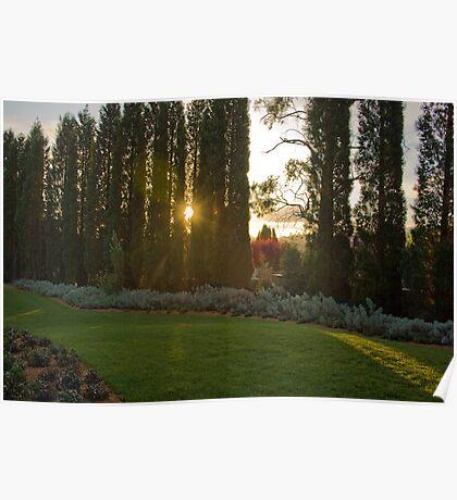 Garden Sunset - Bowral, NSW Poster