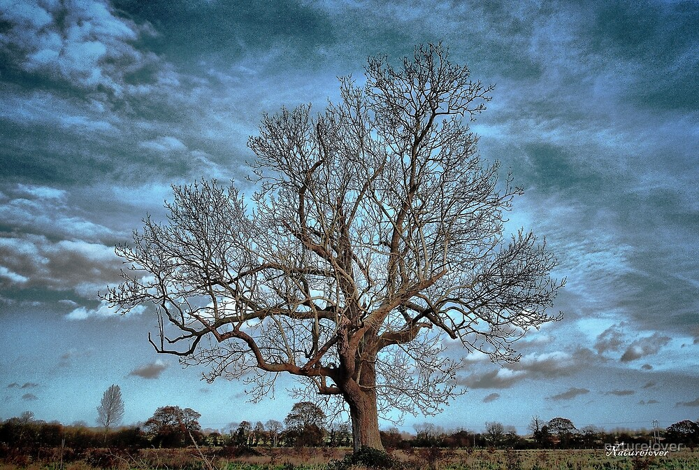 Barely December by naturelover