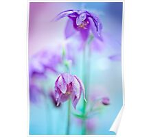Floral soft tender  background from blue fresh cornflower  macro image Poster