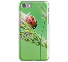 Ladybug sunlight on the field. Beautiful close up of red ladybug in nature iPhone Case/Skin