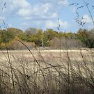 Grassy Meadow at Dinosaur State Park by Susan Russell