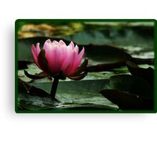 glowing lotus Canvas Print