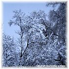 SNOW TREES by DreamCatcher/ Kyrah Barbette L Hale