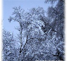 SNOW TREES by DreamCatcher/ Kyrah