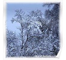 SNOW TREES Poster