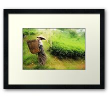 One Day In Tea Plantation Framed Print