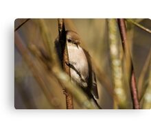 A Tiny Bird Amidst the Branches Canvas Print