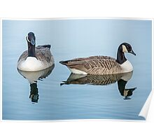 Canada Geese on Lake Poster