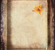 solo by Purplecactus