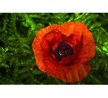 Poppy - Vibrant, Bold and Cheerful Photographic Print